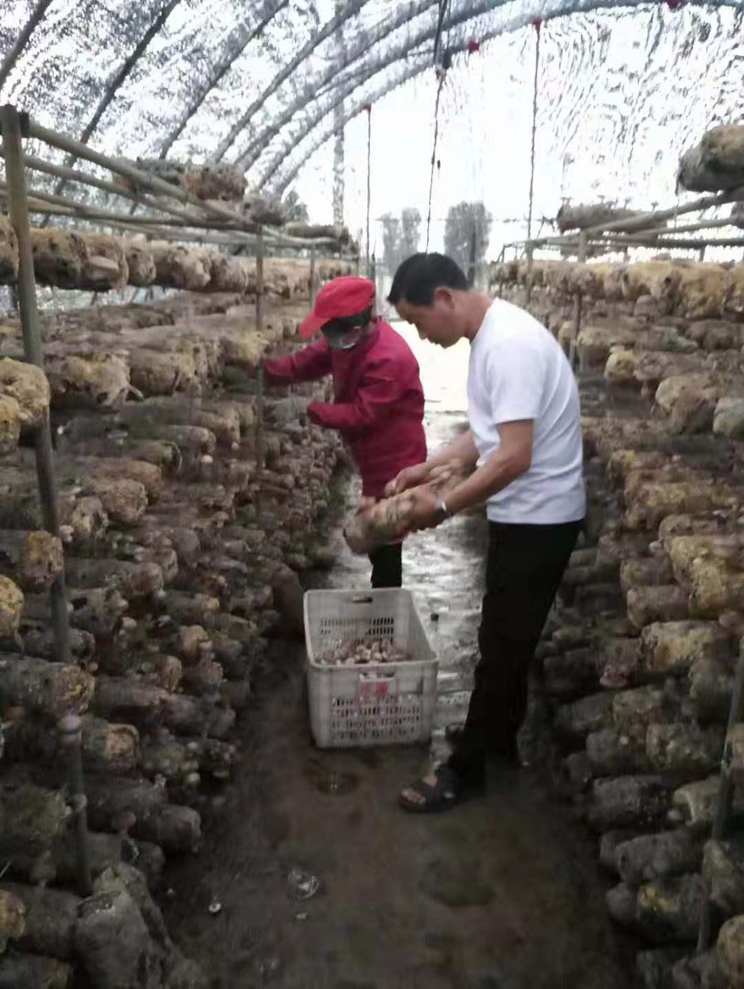 """舞阳""""香菇王""""张德山 带领群众奔小康 中国财经新闻网 588928z.com"""
